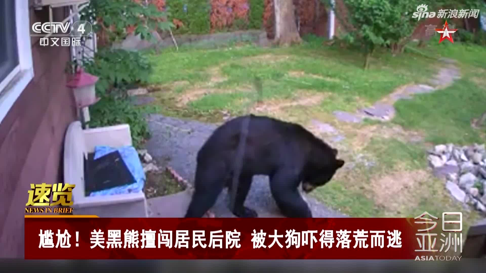 视频:尴尬! 美黑熊擅闯居民后院 被大狗吓得落荒