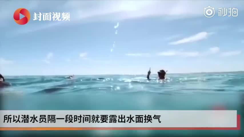 视频-眼睛被鱼钩刺伤 魔鬼鱼向潜水员求助