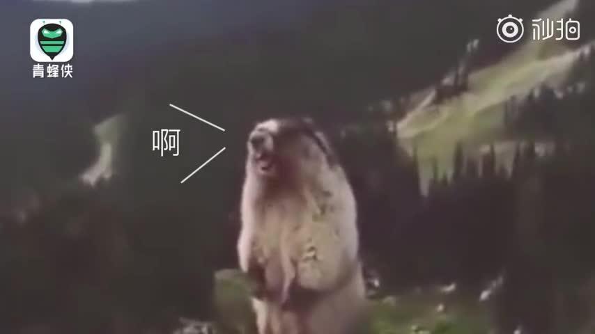 """视频:俄罗斯伞兵学跳伞被""""吓出猪叫"""" 被教官一把"""