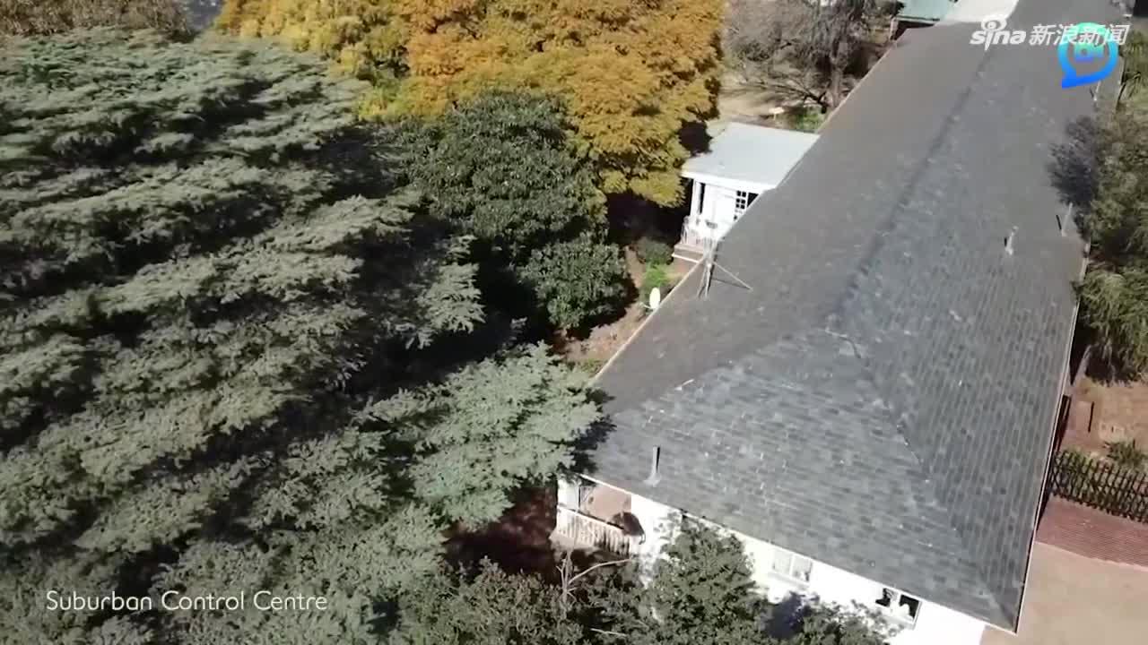视频:会跑酷的狒狒!屋顶上飞檐走壁躲避追捕