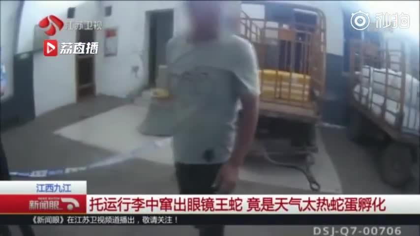 视频-男子网购500多枚蛇蛋泡酒 天太热孵出25