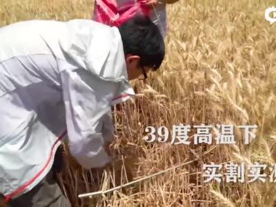 中国是如何养活近14亿人的?有数据有真相!