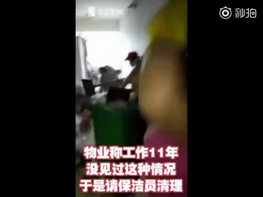 视频-女租客退房留下满屋垃圾和一只死猫 清出24