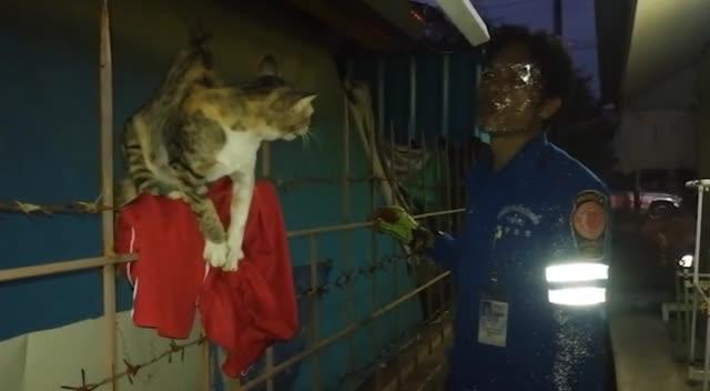 视频:九条命!泰国流浪猫身体被金属栏杆刺穿幸运生