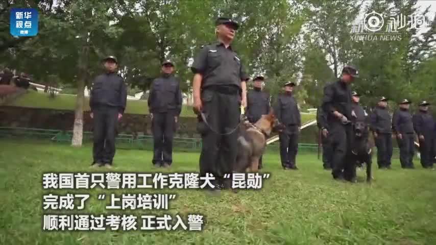 """视频:我国首只警用工作克隆犬""""昆勋""""入警"""
