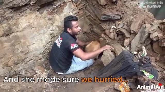 视频:狗宝宝被埋废墟 妈妈坚信孩子都活着拼命刨土