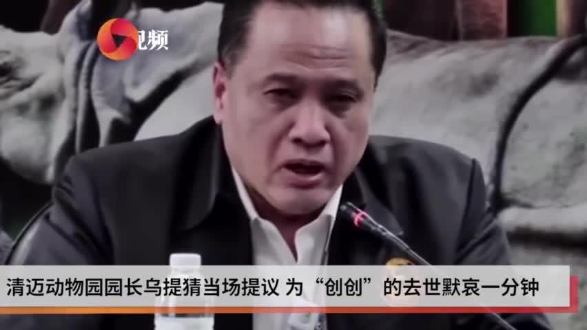 视频-旅泰大熊猫创创饲养员哭成泪人:像自己亲生孩