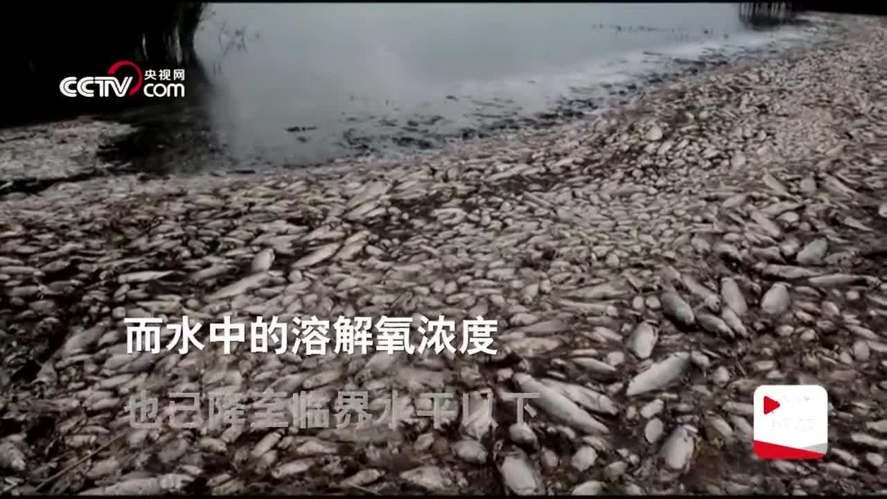 视频-希腊遇高温干旱 曾经最大湖泊湖岸上死鱼遍地