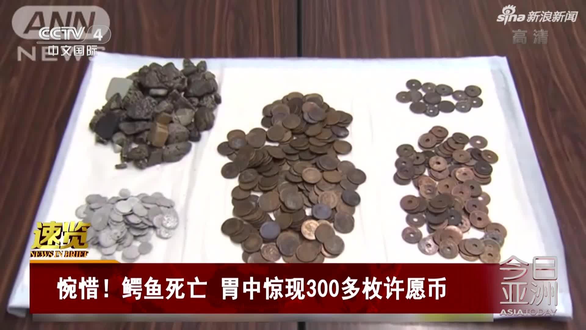 视频-惋惜!鳄鱼死亡  胃中惊现300多枚许愿币