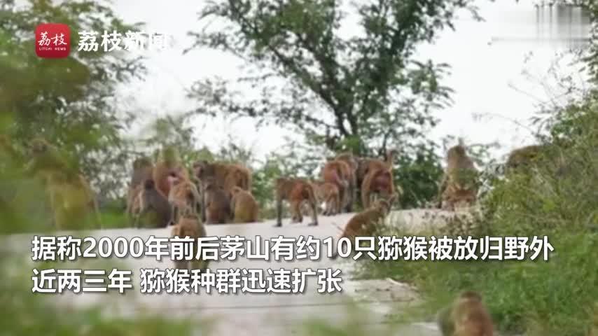 视频-景区屡有游客被猴咬 负责人:猕猴是保护动物