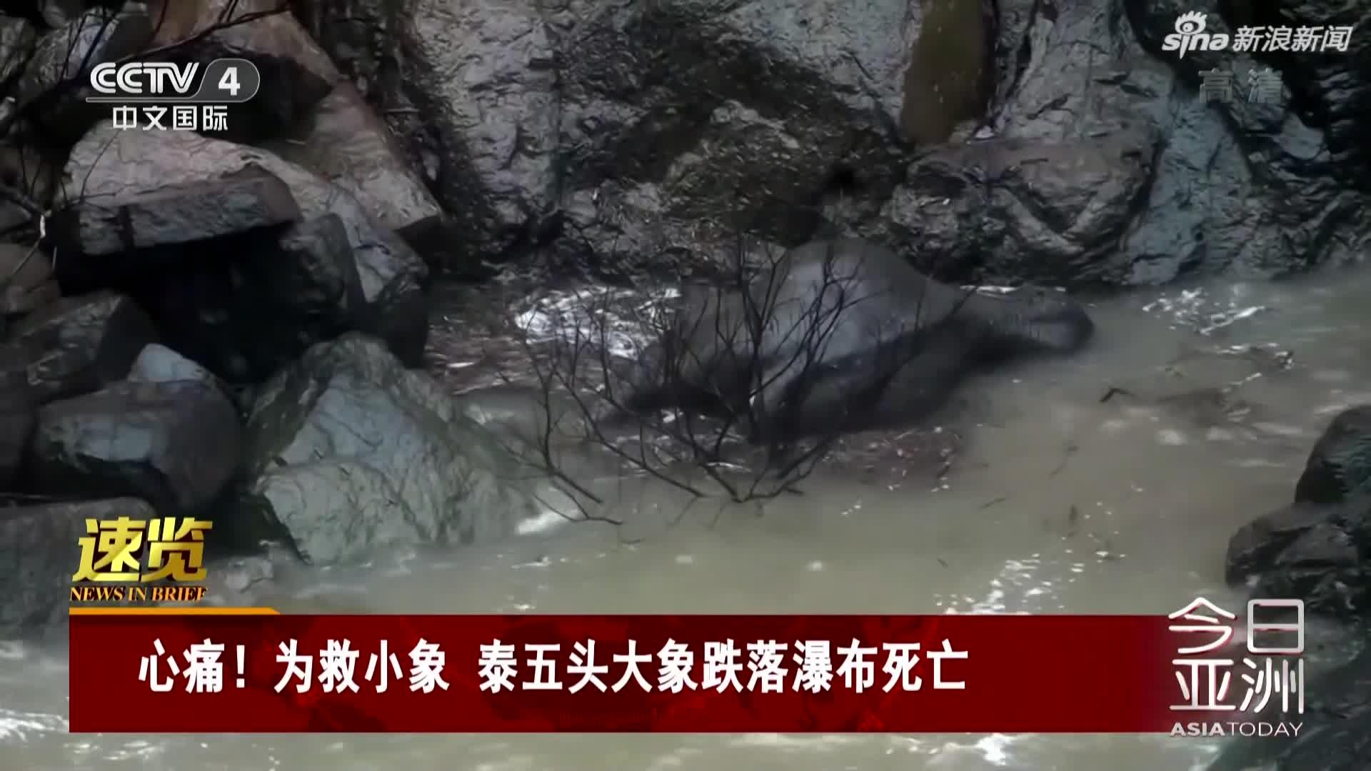 视频-为救小象 泰五头大象跌落瀑布死亡