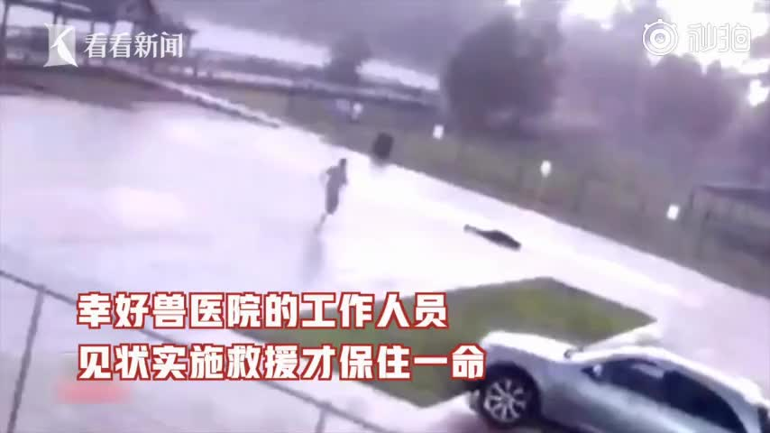 视频-男子遛狗意外被闪电击中 电流脚贯穿全身1秒