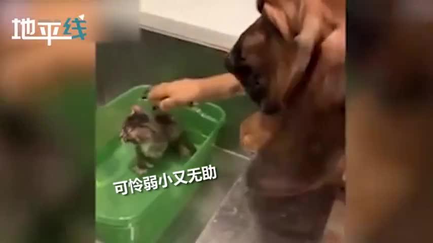视频-暖哭!流浪小猫被救回吓得瑟瑟发抖 5岁小狗