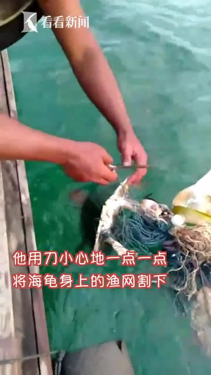 视频|可怜海龟两腿被缠渔网 好心渔民割开绳结解救