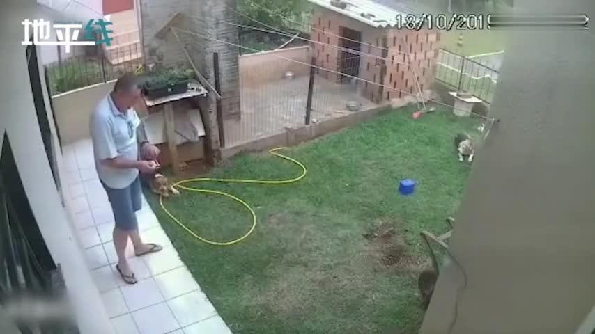 视频-硬核!巴西男子消灭自家蟑螂窝 点火扔进洞后