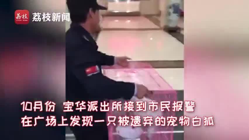 视频:萌化了!民警捡到小白狐 还取名叫狗子