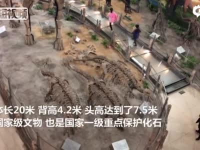 """校园里有""""侏罗纪公园""""?河北一高校内""""藏""""20米长恐龙化石"""