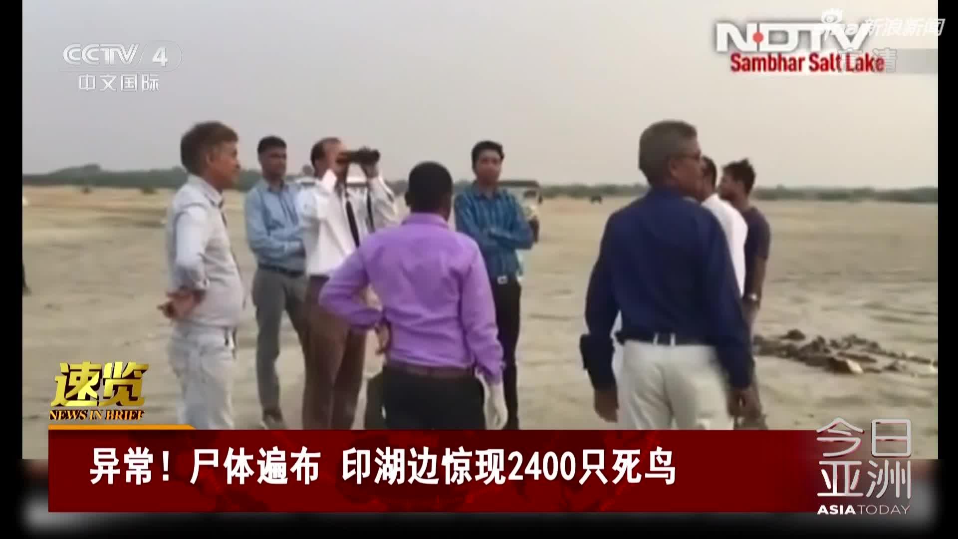 视频:印度湖边发现约2400只死鸟 遍地尸体死因