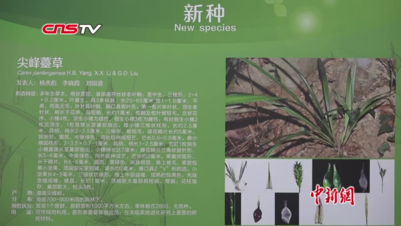 视频-海南物种资源探索重大突破:发现11个特有植