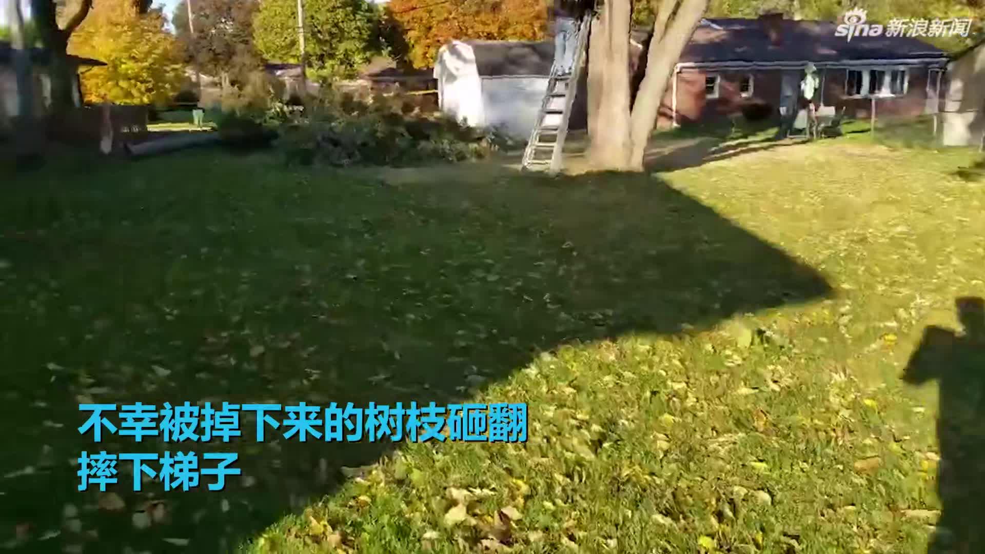 视频-醉酒男子锯树 连人带梯子被掉下来的树枝砸翻