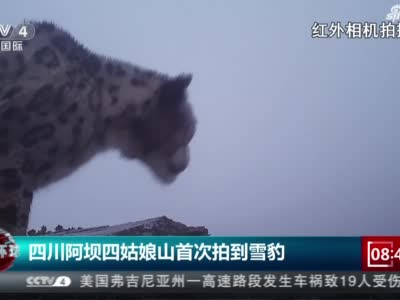 《今日环球》四川阿坝四姑娘山首次拍到雪豹