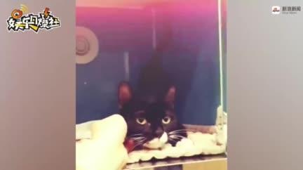 視頻:泫雅愛心救助車禍流浪貓 治療到送養一手包辦