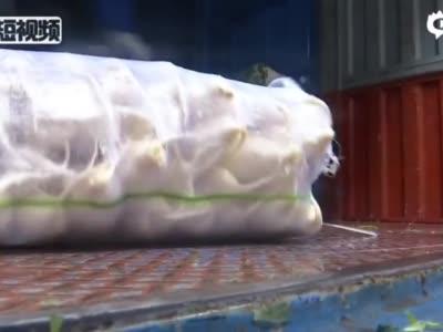 天津港牺牲消防员母亲:中年生子孩子诞生是希望