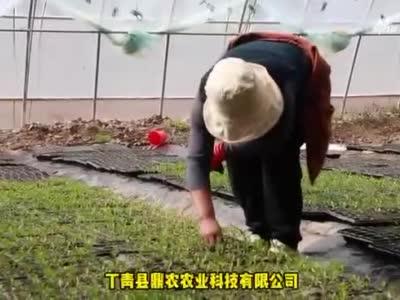 【乡村振兴新天地】产业发展注活水——北辰&丁青侧记(三)