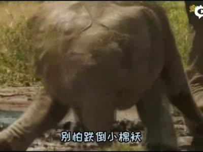 胖宝宝 完整MV视频